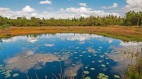 Những đầm lầy chứa xác chết bí ẩn ở Đan Mạch