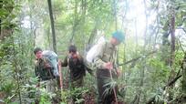 Những người giữ rừng nơi đại ngàn Pù Mát