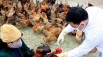 Tiêm vắc-xin phòng dịch bệnh cho vật nuôi sau mưa lũ