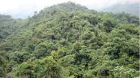 Nghệ An chỉ đạo đóng cửa rừng tự nhiên theo chỉ đạo của Thủ tướng