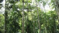 Tương Dương 'dồn lực' trồng rừng nguyên liệu