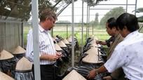 Việt Nam có 'vũ khí chiến lược' chống Zika và sốt xuất huyết?