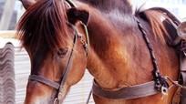 Độc đáo ngựa thồ phố Giát