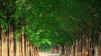 Khám phá những hàng cây tuyệt đẹp trên thế giới