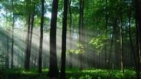 Từ 1/1/2017: Tăng phí dịch vụ môi trường rừng