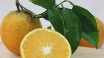 Những thời điểm nào thì không nên ăn cam?