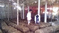 Đào tạo nghề cho lao động nông thôn gắn với thị trường