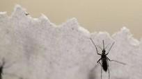 Sắp thử nghiệm điều trị virus Zika trên người