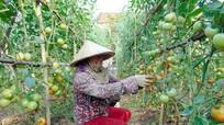 Chuyển đổi cơ cấu cây trồng ứng phó biến đổi khí hậu