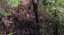 Em trai phát hiện thi thể anh bị cháy sém trong rừng