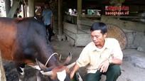Kỳ Sơn chủ động phòng chống rét cho gia súc trước mùa Đông