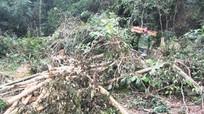 Nữ cán bộ huyện bị phạt 21 triệu đồng vì hành vi phá rừng
