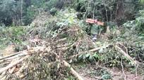 Kỷ luật nghiêm cán bộ huyện Quỳ Châu tổ chức phá rừng trái pháp luật