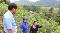 Hiệu quả 'kích cầu' nghề trồng rừng ở Tương Dương