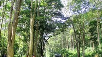 Công bố kết quả kiểm kê rừng năm 2015: Nghệ An có gần 1 triệu ha rừng