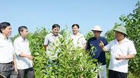 Liên kết với dân phát triển bền vững nguyên liệu cho nhà máy MDF