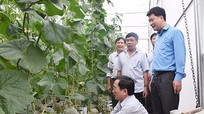 Sản xuất nông nghiệp sạch nhu cầu tất yếu
