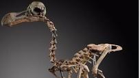 Bộ xương chim tuyệt chủng có giá hơn 430.000 USD