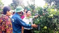 Thị xã Thái Hòa có hơn 2000 hộ kinh doanh giỏi
