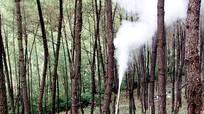 Những cán bộ nghỉ hưu bảo vệ 100 ha rừng đầu nguồn