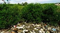 Cảng cá Lạch Vạn ngập rác