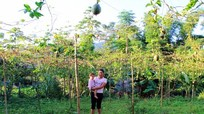Vì sao chậm cấp kinh phí hỗ trợ vùng trồng chanh leo ở Quế Phong?