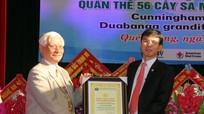 Trao bằng công nhận Cây Di sản Việt Nam cho quần thể 56 cây sa mu dầu và 5 cây phay sừng