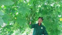 Nhiều cơ chế hỗ trợ nông dân trồng rau màu phục vụ Tết