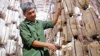 Yên Thành: Hơn 13.000 hộ nông dân sản xuất kinh doanh giỏi