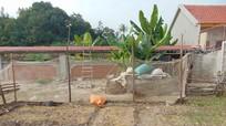 Di chỉ khảo cổ tiêu biểu thời đá mới biến thành nơi trồng rau, nuôi gà