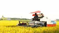 Thuê gom ruộng lớn để sản xuất hàng hóa