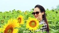 Du khách sẽ được lướt web miễn phí tại cánh đồng hoa hướng dương