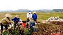 Nông dân xứ Nghệ biến bèo tây thành phân vi sinh