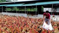 Khởi nghiệp từ nuôi gà ri