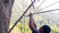 Dân bản vùng biên dùng cây cối, hàng rào làm cột điện