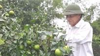 Chuyện ông giáo dạy Tiếng Anh và dạy trồng cây miễn phí