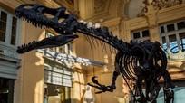 Bộ xương khủng long chết trong lúc chạy bán đấu giá triệu đô