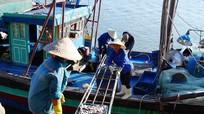 Nhộn nhịp làng biển Quỳnh Phương