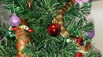 Kinh hãi thấy rắn cực độc trên cây Giáng sinh
