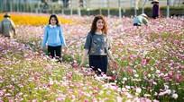 Những điểm chụp ảnh lý tưởng gần cánh đồng hoa hướng dương