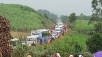 Áp lực giao thông khủng khiếp tại cánh đồng hoa hướng dương