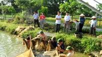 Nhân rộng mô hình hỗ trợ nông dân sản xuất, chăn nuôi sạch