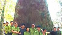 Một chính sách  'cứu cánh' nghề rừng