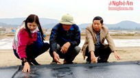 Diêm dân Nghệ An trải bạt sản xuất muối sạch, hiệu quả vượt trội