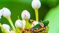 Vẻ đẹp các loài côn trùng dưới ống kính nhiếp ảnh