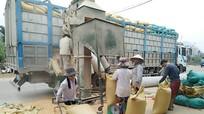 Nhộn nhịp mùa thu mua chế biến ngô Lào
