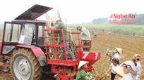 Công ty TNHH mía đường NASU tăng giá mía kỷ lục 980.000 đồng/tấn