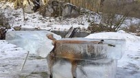 Châu Âu lạnh kỷ lục, cáo chết trong khối băng