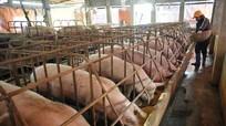 Thịt lợn rẻ nhất 10 năm: 1 kg thịt không bằng 1 cân khoai