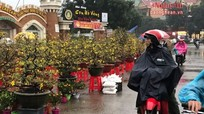 Dân Vinh đội mưa đi mua đào, mai chưng Tết